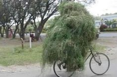 forest on bicycle